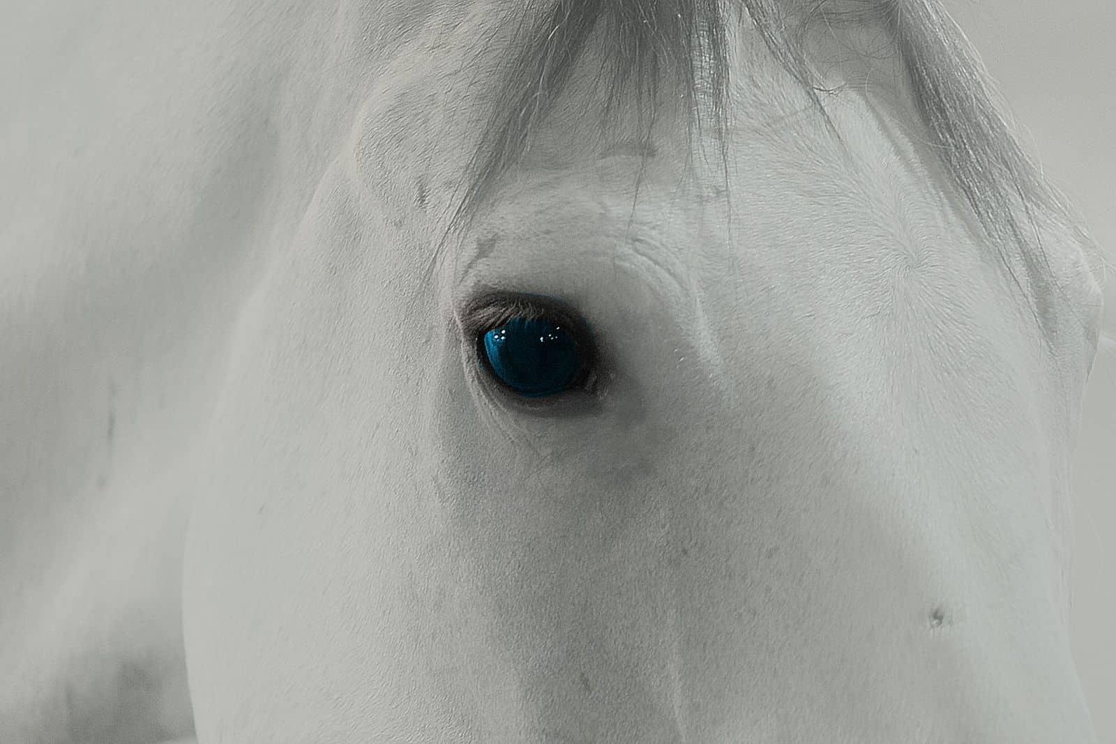 white-horse-blue-eye